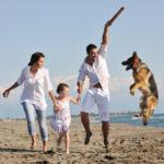 Sonnenstrahlungen und Temperaturen ab schon 25 Grad können für die Haustiere zu gefährlichen Hitzschlägen führen.