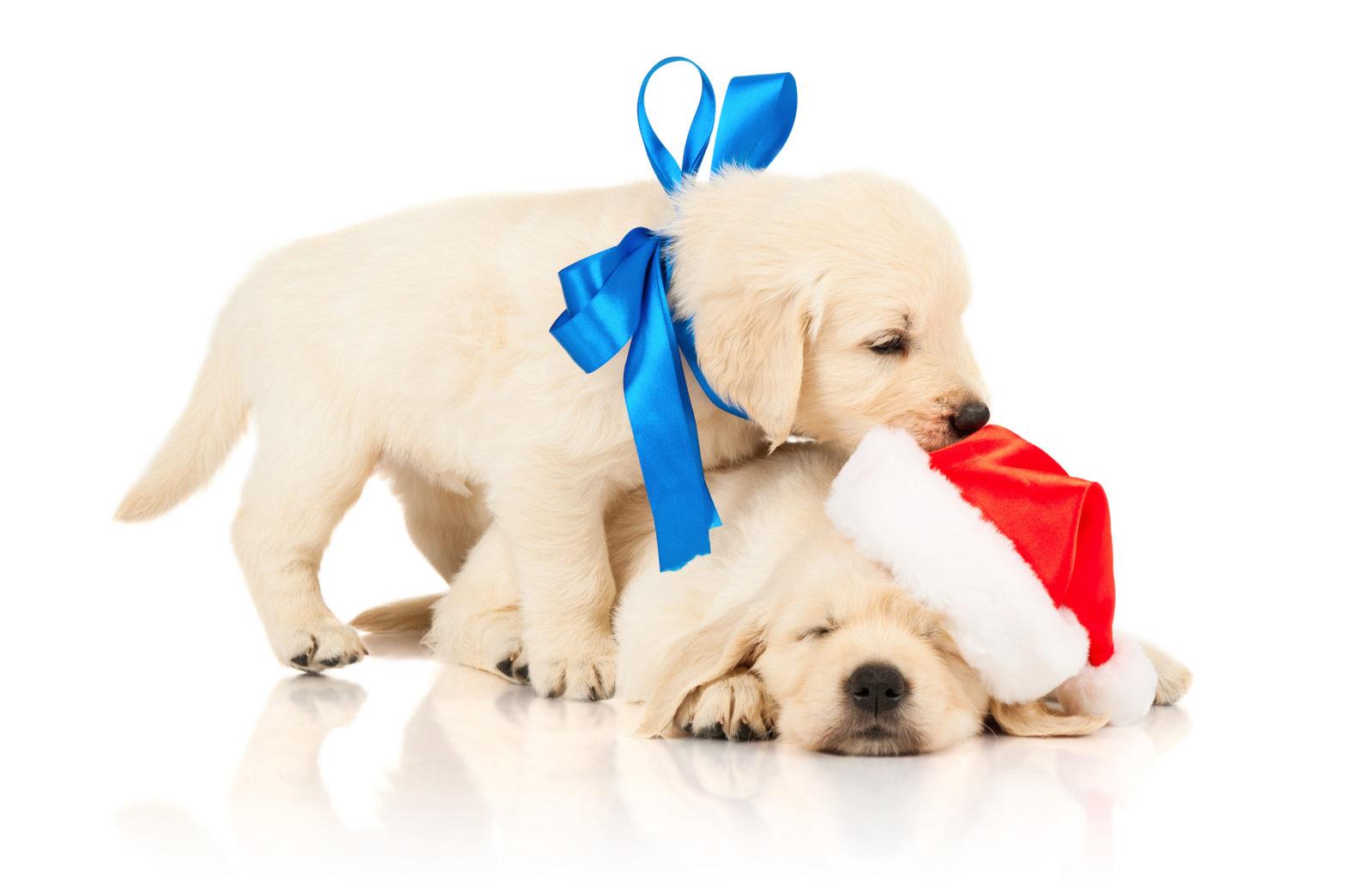 Ein Hund als Weihnachtsgeschenk eignet sich nicht für alle Kinder.