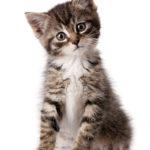 Preisunterschiede bei Tierkrankenversicherungen