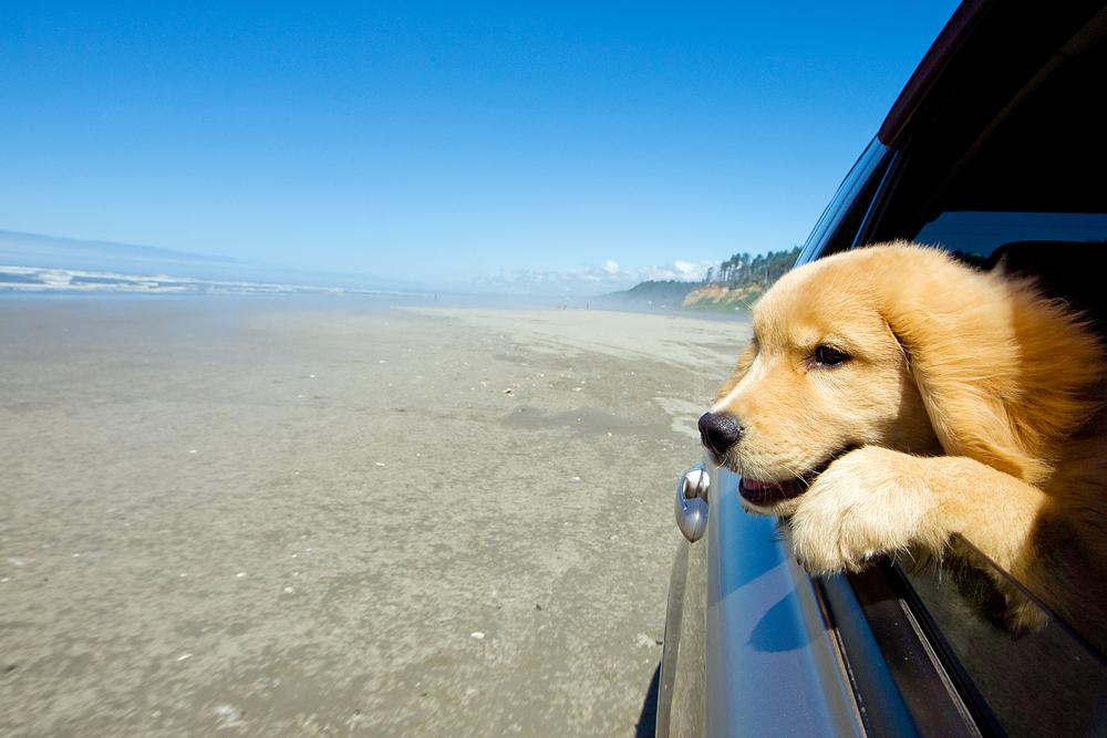 Wer mit Hunden verreist, sollte die Daten der Tierhalter-Haftpflichtversicherung griffbereit haben.