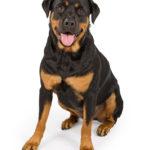 Ohne Hunde-Haftpflichtversicherung können auf den Tierhalter hohe Kosten zukommen.