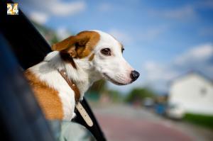 Hunde auf Reisen